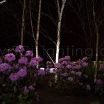 Image of SGi's LED Spot Lighting in a Landscape Application