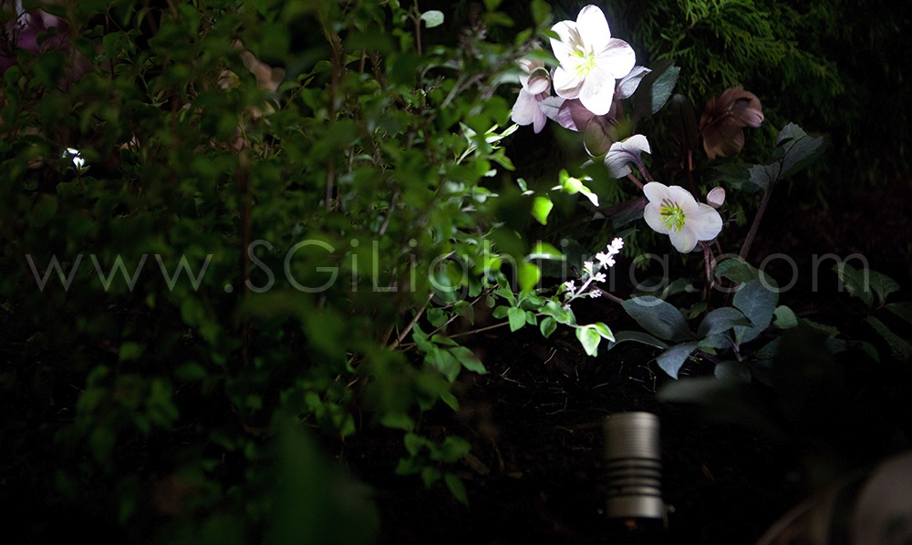 Image of SGi's LED Spot Light in a Landscape Application
