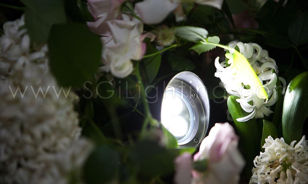 Image of SGi's LED Spot Light in a Garden Landscape Application