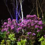 Image of SGi's LED Spot Lighting in a Garden Landscape Application